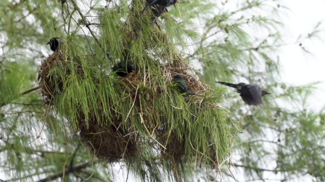 Starling takes off rom nest, high speed