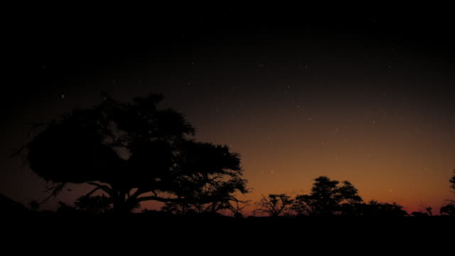 Stars appear in the sky above silhouetted trees. Available in HD.