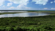Static long shot of Mangrove Forests