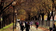 Static shot of tree-lined walkway at the National Mall filled with people in Washington DC