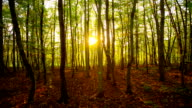 Steady cam shot of sunlight in the forest