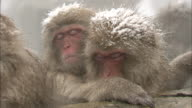 Steam rises from a hot spring where Japanese macaques bathe.