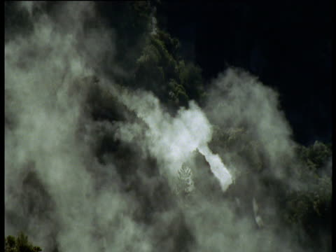 Steam rises from volcanic vents in forest, Rotorua, North Island, New Zealand