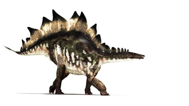 Stegosaurus dinosaur animation.