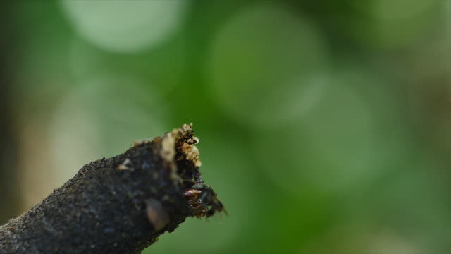 Stingless bee in the nature.