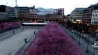 Stockholm Cherry Tree