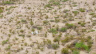 WS AERIAL TS Stone graves in Chihuahuan Desert / Terlingua, Texas, United States
