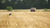 Ooievaar en trekker op gecultiveerde boerderij