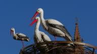 Stork figures at the Christmas Market of Strasbourg, Alsace, France