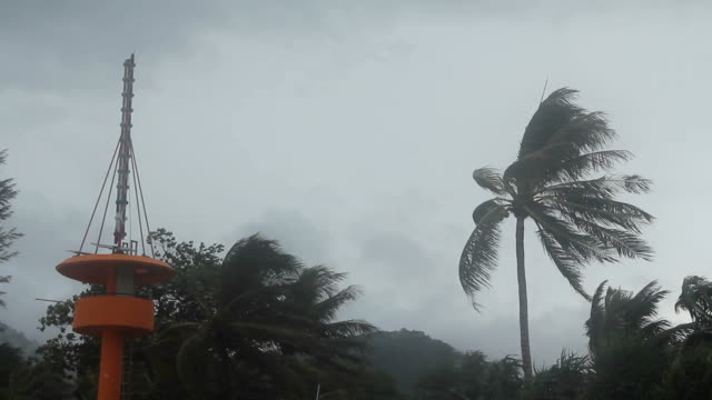 Storm blowing coconut palm trees.