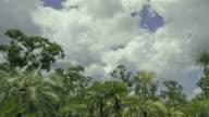 WS TU T/L Storm clouds boiling over pandanus and eucalyptus trees / Darwin, Northern Territory, Australia.