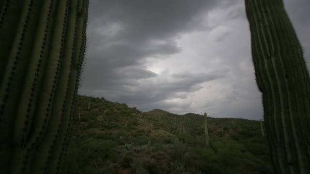 Storm clouds drift over saguaro cactus in the Sonoran Desert. Available in HD.