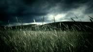 Sturm über field