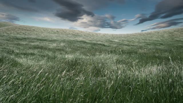 T/L, WS, Stormy sky above grass blowing on wind, Blenheim, Marlborough, New Zealand