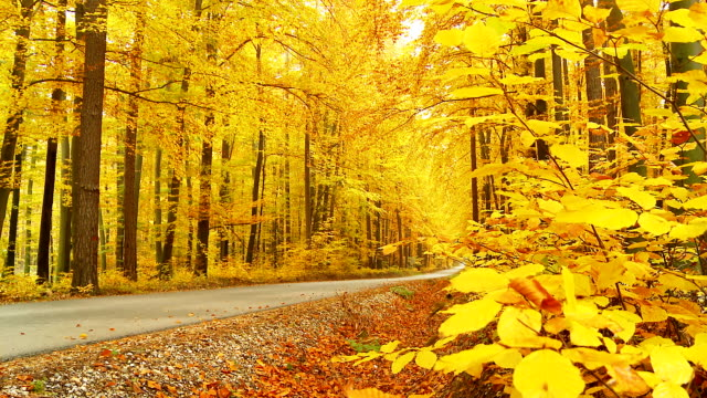 HD DOLLY: Gerade Forest Road