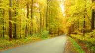 HD DOLLY: Straight Road Leading Through A Forest