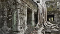 Strangler fig tree roots growing over Ta Prohm temple with Apsara relief
