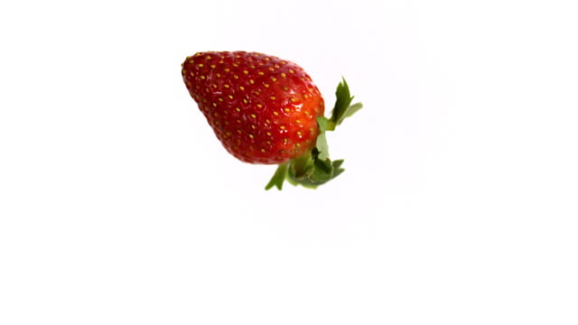 Strawberries, fragaria vesca, Fruit falling against White Background, Slow Motion