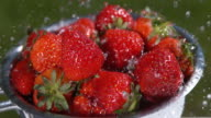Strawberries, fragaria vesca, Water Falling on Fruits, Slow Motion