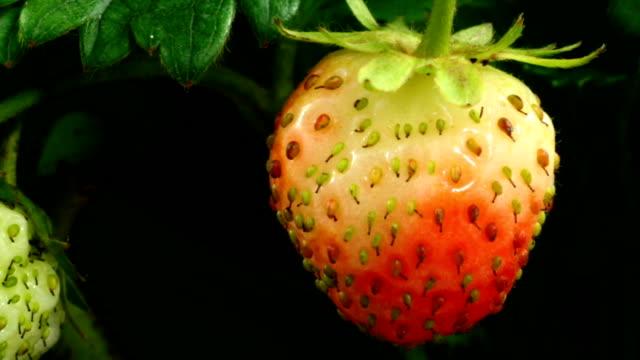 Strawberry ripen