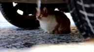 Stray cat on the street
