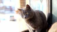 Streunende Katzen auf der Straße