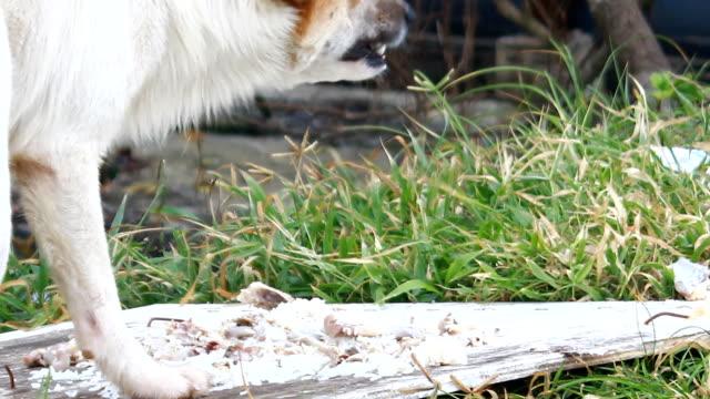Stray Dog Eating