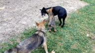 Stray dogs fighting in park