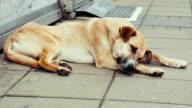 Stray dogs resting