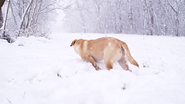 SLO MO Stray Puppy In The Snow