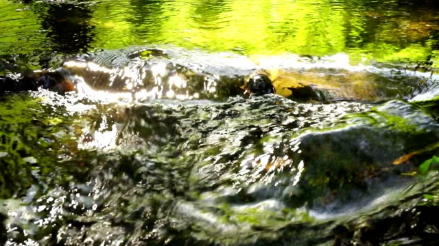stream, brook, flow, torrent, outpouring,