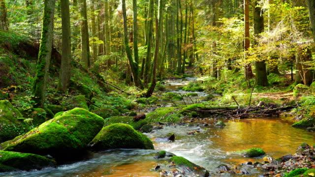 Stream stromen In herfst bos