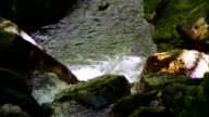 A stream flows over rocks in a lush jungle. Available in HD.