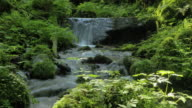 stream in forest catches sunlight