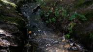 Stream in bos, Norhtern Ierland