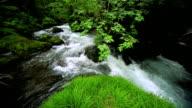 Stream im grünen Wald
