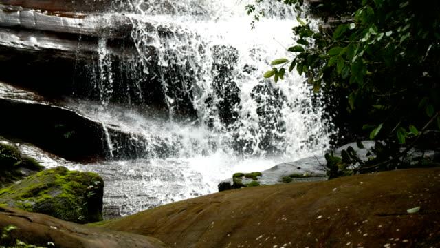 Stream in groene woud