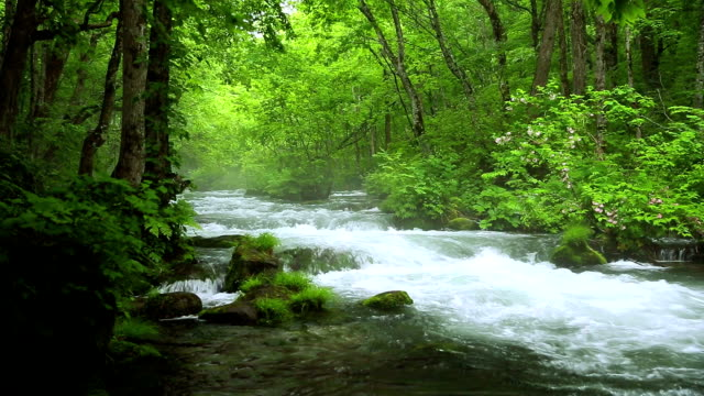 Stream in green forest,Dolly Shot