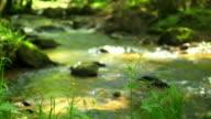 Stream im Frühjahr Wald Kamerafahrt mit Dolly