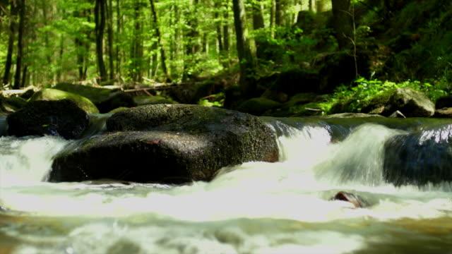 HD-Stream im Frühjahr Wald