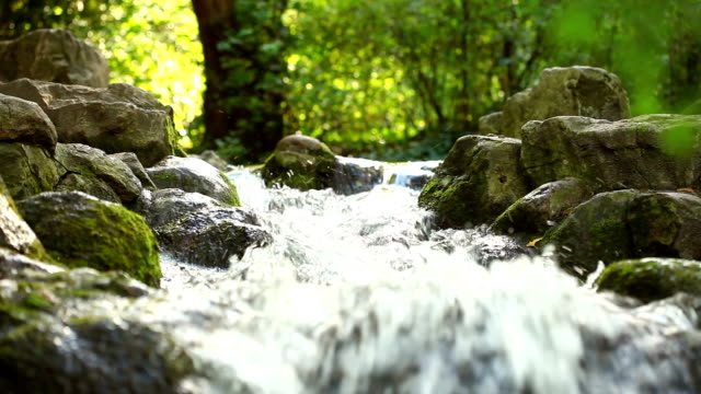 Stream in spring forest