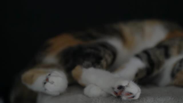 street cat licking her face