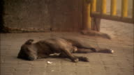 Street dog sleeps on pavement as pedestrians walk by Available in HD.