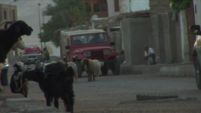 W/S street in Dahab, man washing himself in the sidewalk, goats, cars