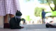 Street musician's pet cat, CU profile