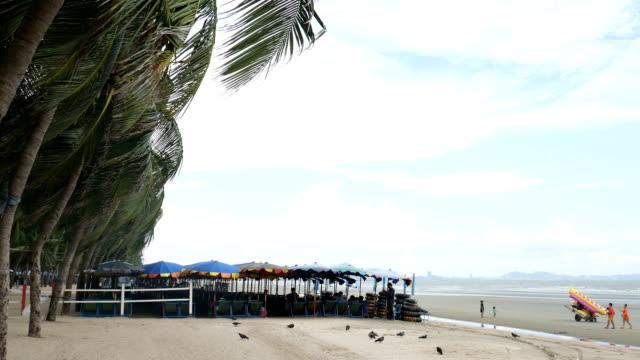 Starker Wind gegen die Palme und Liegestühle am Strand