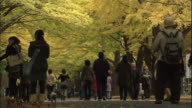 Students walk along Pedestrian Paradise at Hokkaido University.
