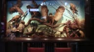 Stuffed owls stand on display behind a case inside Insects In The Backyard restaurant at Changchui market in Bangkok Thailand on Wednesday Aug 16...