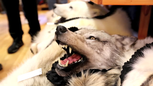 A stuffed Polar Bear and Wolf in a shop in Longyearbyen on Spitsbergen, Svalbard. Climate change poses a huge threat to Polar Bears. As the sea ice retreats, they lose ground and time to hunt their main prey, seals, which they can only hunt on sea ice. Lat