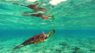 Stunning footage of a nice turtle swimming underwater in the paradise Gili islands with clear waters recorded during travel vacations in Indonesia.